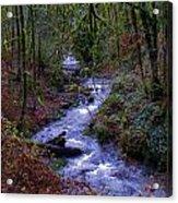 Along The Creek Acrylic Print