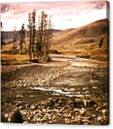 Along The Larmar River 2 Acrylic Print by Marty Koch
