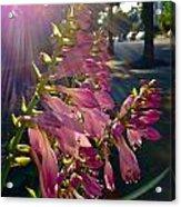 Along The Sidewalk Acrylic Print