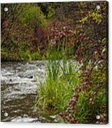 Along The Stream Acrylic Print