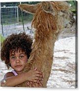 Alpaca Love Acrylic Print