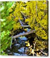 Alpine Creek  Acrylic Print