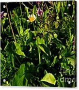 Alpine Fresh  Acrylic Print by Tim Rice