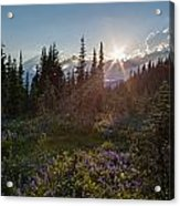 Alpine Meadow Sunrays Acrylic Print