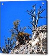 Alpine Wyoming Acrylic Print