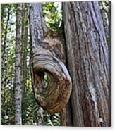 Altered Tree Trunk Growth Acrylic Print