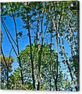 Alternate Reality - Reflected View Of The Forest From A Pond In Garland Ranch Park In Carmel Valley. Acrylic Print