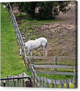 Always Greener On The Other Side Acrylic Print