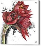 Amaryllis Flowers - 2. -  Elena Yakubovich Acrylic Print