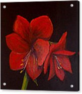 Amaryllis On Black Acrylic Print