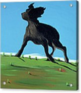 Amazing Black Dog, 2000 Acrylic Print by Marjorie Weiss