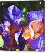 Amazing Iris Acrylic Print