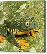 Amazon Leaf Frog Acrylic Print