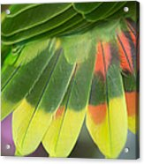 Amazon Parrots Feathers Abstract Acrylic Print