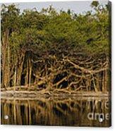 Amazon Trees Acrylic Print