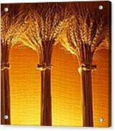 Amber Grains Acrylic Print