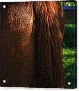 Amber Horse Tail Acrylic Print
