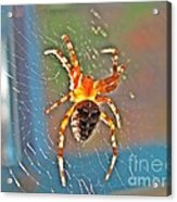 Amber Thing Acrylic Print by Halyna  Yarova