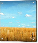 Amber Waves And Blue Skies Acrylic Print