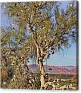 Amboy Shoe Tree By Diana Sainz Acrylic Print