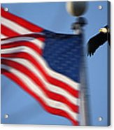 America Soaring Acrylic Print