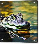 American Alligator 1 Acrylic Print
