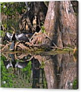 American Anhinga Or Snake-bird Acrylic Print by Christine Till