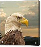 American Bald Eagle With Peircing Eyes Acrylic Print by Douglas Barnett
