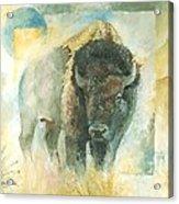 American Bison Buffalo Bull Acrylic Print