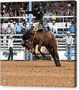 American Cowboy Riding Bucking Rodeo Bronc I Acrylic Print