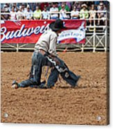 American Cowboy Thrown From A  Bucking Rodeo Bronc Acrylic Print