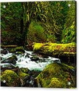 American Jungle Acrylic Print