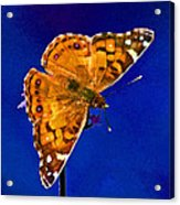 American Lady Butterfly Blue Square Acrylic Print