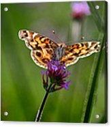 American Lady Butterfly In Garden Acrylic Print