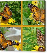 American Lady Butterfly - Vanessa Virginiensis Acrylic Print