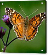 American Lady Butterfly With Green Background Acrylic Print