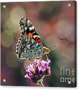 American Painted Lady Butterfly 2014 Acrylic Print