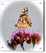 American Painted Lady Butterfly White Square Acrylic Print