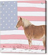 American Palomino Acrylic Print