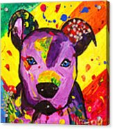 American Pitbull Terrier Dog Pop Art Acrylic Print