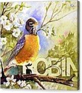 American Robin And Wild Plum Acrylic Print
