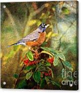 American Robin - Harbinger Of Spring Acrylic Print
