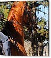 American Saddlebred Horse Head Shot Acrylic Print