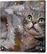 American Shorthair Cat With Holiday Tree Acrylic Print