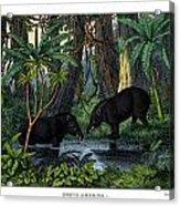 American Tapir Acrylic Print