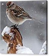 American Tree Sparrow In Snow Acrylic Print