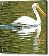 American White Pelican On A Lake Acrylic Print