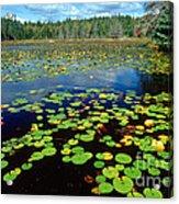 Ames Pond Acrylic Print