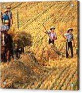 Amish Boys Wheat Harvest  Acrylic Print