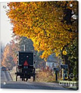 Amish Buggy Fall 2014 Acrylic Print